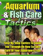 Aquarium Fish Care Tactics